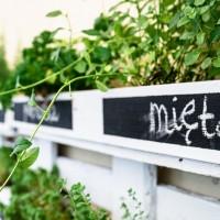 Zdjęcie wystroju ogródka 42